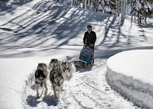 A round trip on a dog-drawn sleigh in central Switzerland