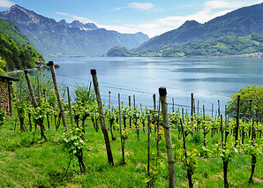 Wine tour on the Walensee