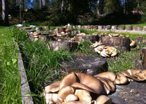 The world of mushrooms in the Berner Oberland