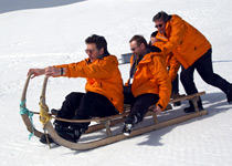Horned sledge fun