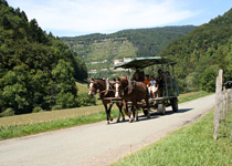 Horse-drawn carriage along the Doubs