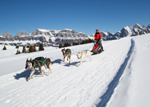 A round trip on a dog-drawn sleigh in Flumserberg