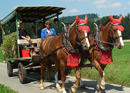 Fondue, barbecue and carriage rides in the Emmental