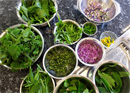 Cooking workshop with wild herbs